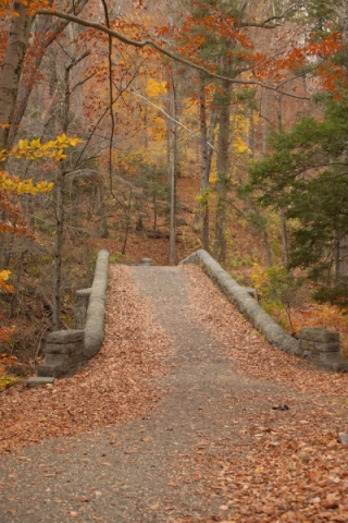 Rockefeller_Preserve_in_the_Fall_P_copy.jpg
